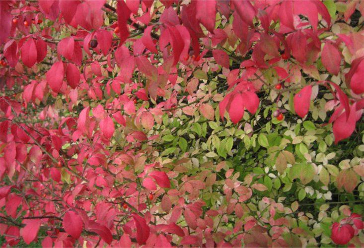 Summer to Fall leaf change