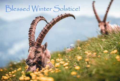 Blessed Winter Solstice ibex goats